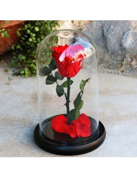 Rose Flower Festive Preserved Forever Rose Immortal Fresh Rose Glass Cover Unique Gifts